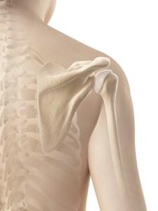 http://www.dreamstime.com/royalty-free-stock-photos-female-shoulder-skeletal-anatomy-d-rendered-illustration-image34777148