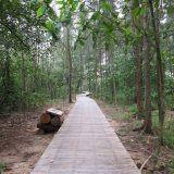Mangrove-walk-768x1024-768x1024