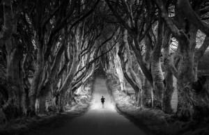 The Dark Hedges of NorthernIreland