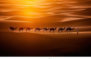 Camels Crossing the Sahara