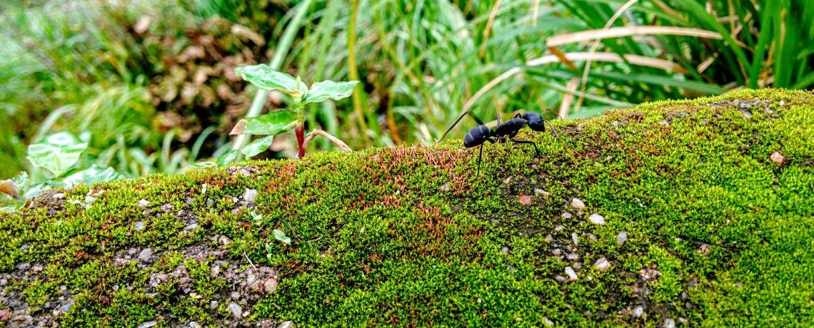 Lesson Audio – David Trimble – The Ant and the Sluggard