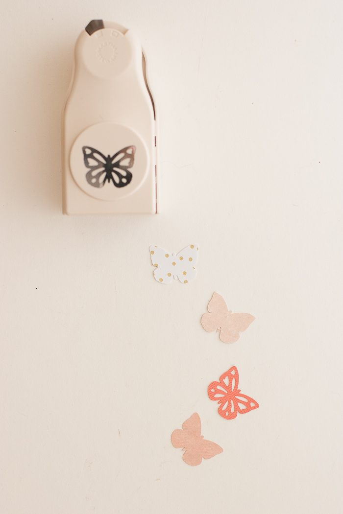 butterfly backdrop-9532