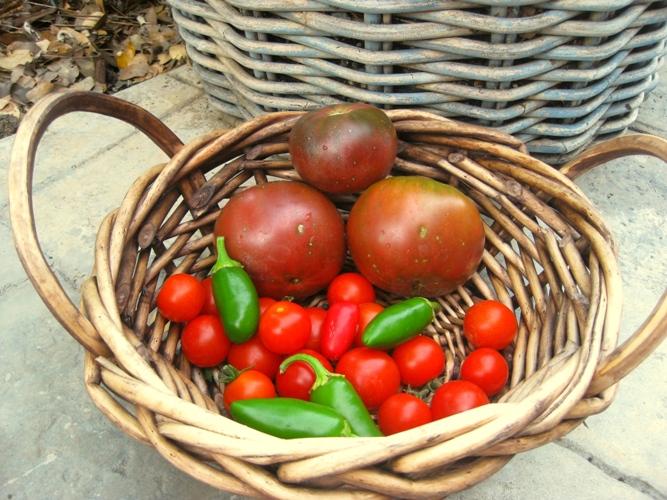 Galvanized tomato garden for one