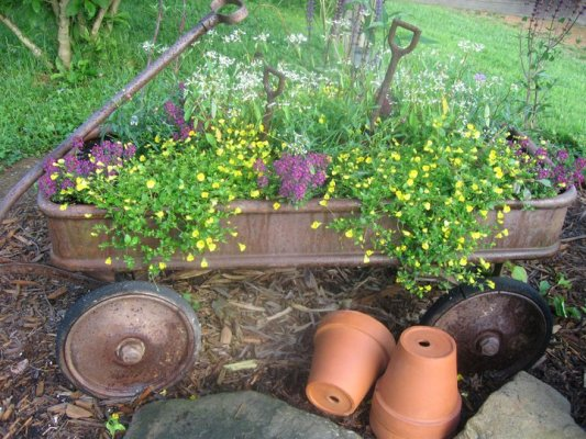 Tammy's cottage garden of yesteryear