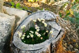 Using Old Wood in the Garden