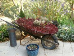 Vintage Garden Wheelbarrows