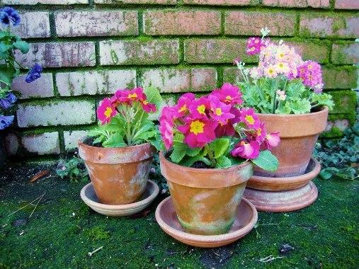 Jane Krauter's mossy pots