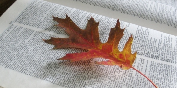 6 ways to preserve Autumn's beautiful leaves