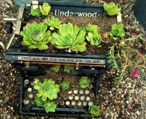 My typewriter planter