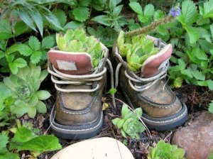 An echeveria 'hen' tucked into a bit of soil in a pair of Kirk Willis's child sized boots