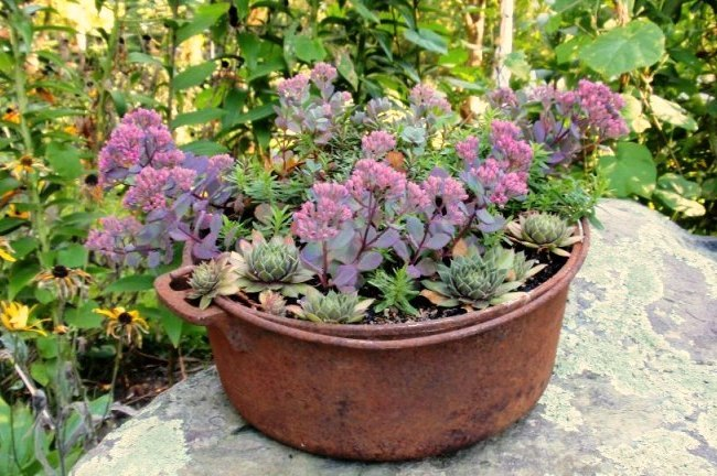Cherrie Carine's rusty sedum and echeveria pot