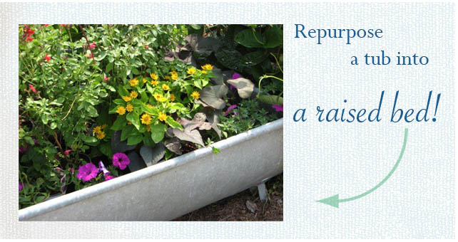 Vintage tub, bathtub raised bed