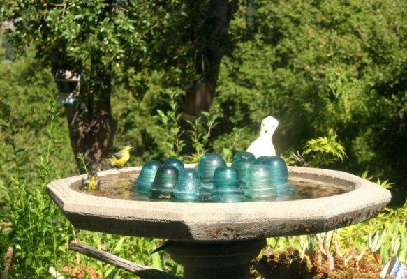 Finches visit my bird bath