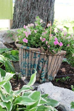 Your adorable planted egg basket!