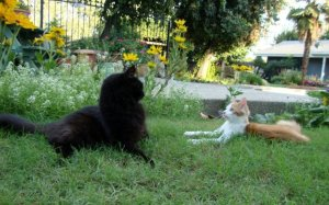 Squirrelly & Buddy meet