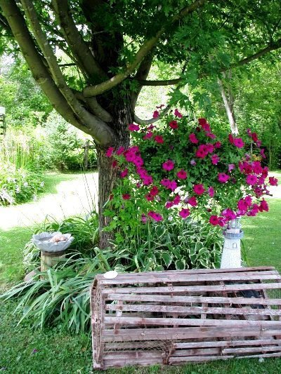 Catherine's pink petunias hovers in a tree