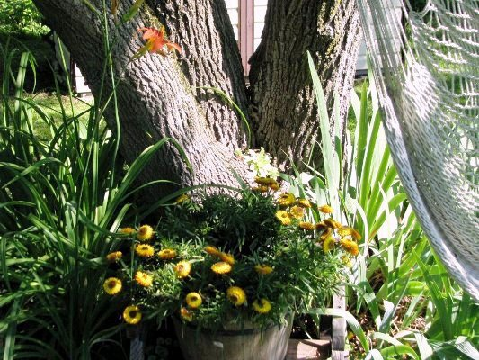 """Catherine Lepage says, """" Almost hidden, succulents grow in this tree."""""""