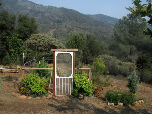 Harvesting the Straw bale garden