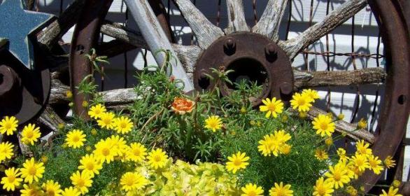 Denise Hallwachs' rustic and rusty wheel paired with sunny yellow daisies