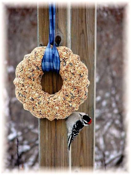Jeanne Sammons's wreath attracts a woodpecker