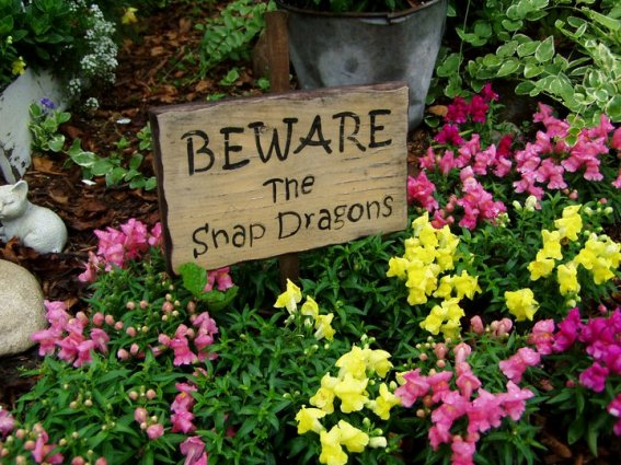 """Jean Morrow """"Beware the Snapdragons"""""""