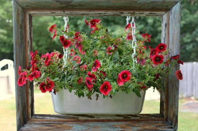 Karen Wilson Love these cute little flowers!