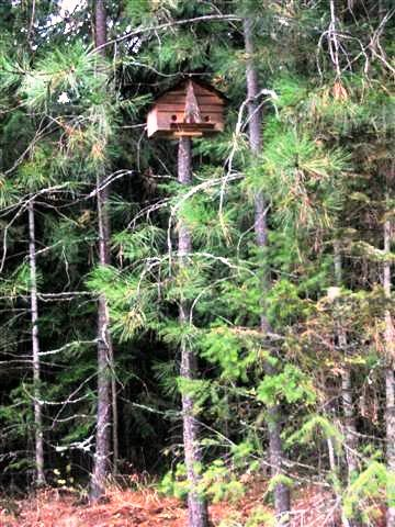 Kirk's woodsy birdhouse pole