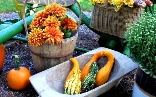 An Autumn harvest