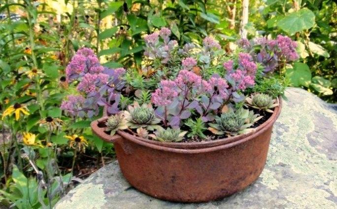 Cherrie Carine's rusty sedum and echeveria pot