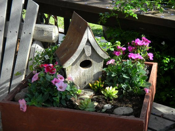 Joy Hale's garden started with a tray,...a tray on a tree!