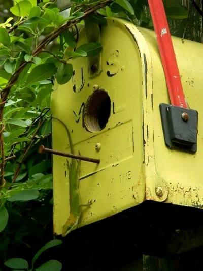 Mailbox adorns the top of the arbor