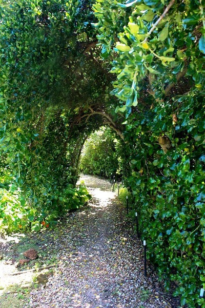 Yvonne's shady entrance through the hedge
