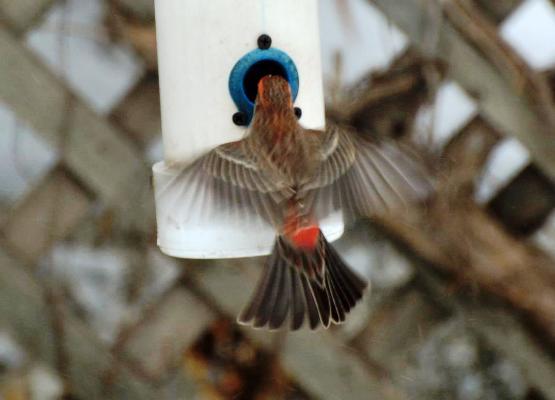 Ann Brody's DIY bird feeder