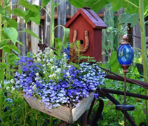 Blue lobelia in Marie Niemann's garden