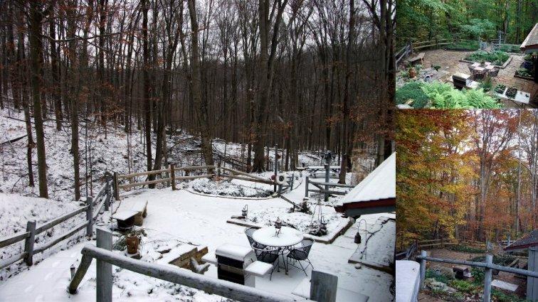 Cindy Trubisky's garden in Winter