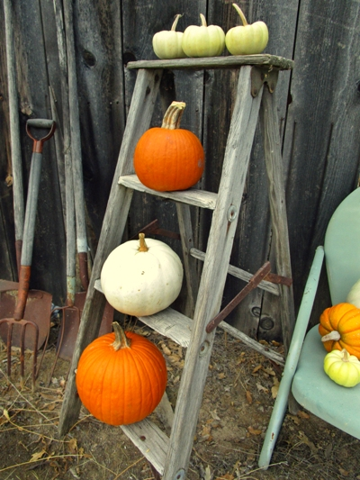Sue Langley's Fall pumpkin display
