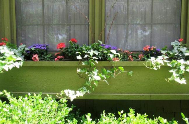 Sandy Mitchell's window box idea