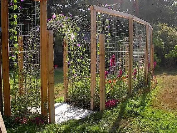 Tina's ten foot trellis would be a great deer fence