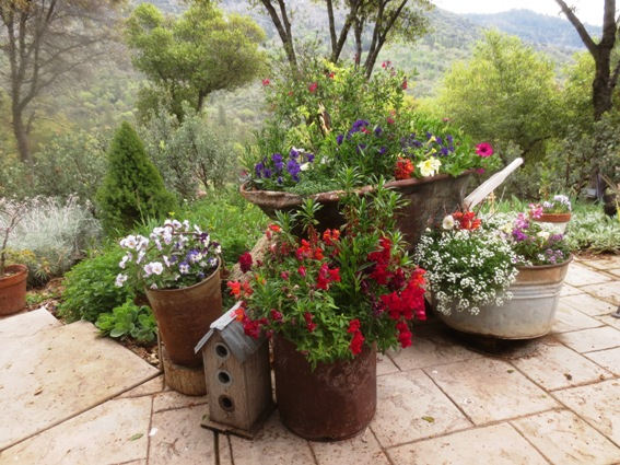 Rusty buckets, wheelbarrow and galvanized tub make a quaint and colorful display