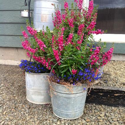 Jesse Lyons filled buckets with snapdragons and lobelia