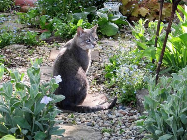 Mr. Grayson my garden helper
