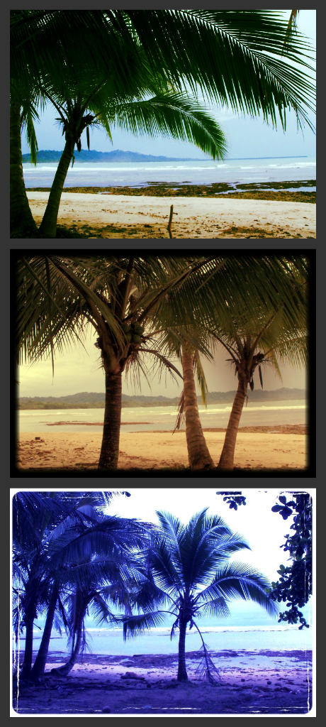 PV palm tree collage