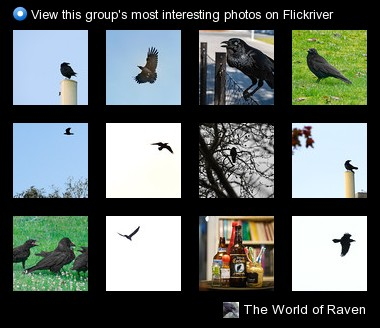 The World of Raven - View this group's most interesting photos on Flickriver