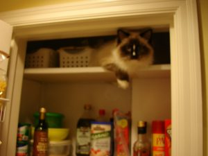 Charlie in the Pantry