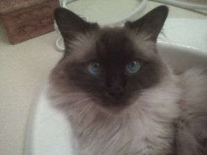 Picture of Silia in bathroom sink patiently waiting for water