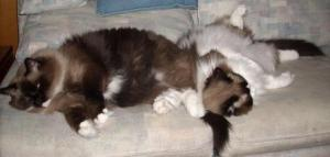 Java and Mocha Sleeping Together