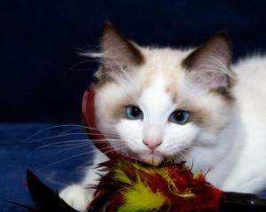 Taz With A Feather