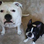 Floppycats.com Interview With Jaime Derringer of Dog-Milk.com