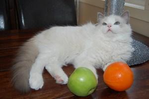 Humphrey as a kitten