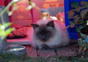 King in his Playhouse - Summer 2010